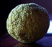 Hedge Apple, Maclura pomifera. by Billlee