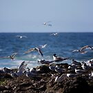 Birds over Newcastle Baths by Daniel Rankmore
