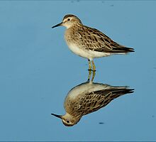 Reflection of a Sandpiper  by Alwyn Simple