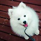 Monte (Japanese Spitz) by Fun Kitten Studios