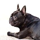 French bulldog by ritmoboxers