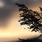Silhouetted Sage by teresalynwillis
