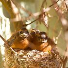 Fantail chicks - feed me! by nzpixconz
