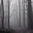 Forest fog by Heather Thorsen