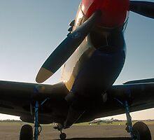 P-40 Kittyhawk by Anthony Woolley