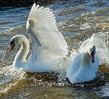 Stop Splashing Me! by Susie Peek