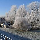 A frosty morning  by Johanna26