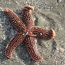 Red Star on the Beach by Rosanne Jordan