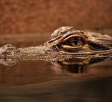 Baby Alligator by Sazzyshortness