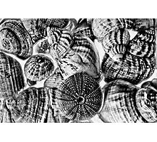 Shell Textures Photographic Print