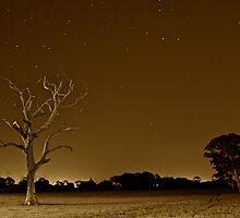 Stars, Night & Tree by Michael Kompa