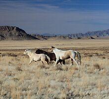 Wild Desert Mustangs by Gene Praag
