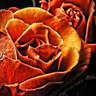 Orange Roses by Robin Lee