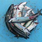 Mackerel Fishing by klarutshka