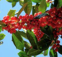 Holly by rosaliemcm