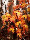 Leaf Glow by Eileen McVey