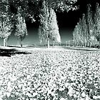 Infrared forest by DavidCucalon
