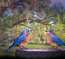 Bluebirds in the Deep South by Bonnie T.  Barry