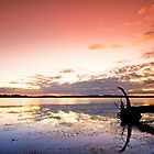 Sunrise on the Dam - Inglewood Qld Australia by Beth  Wode