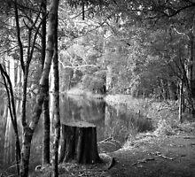 Sanatorium Lake 2 by Christine  Wilson Photography