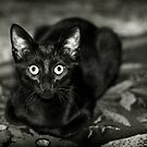''Black Beauty'' by Ḃḭṙḡḭṫṫä ∞
