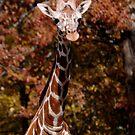 Giraffe by Lolabud