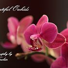 Beautiful Orchids by Jan Vinclair