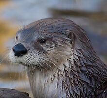 A Lonely Otter by Lauren Tucker