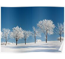 Frosty Trees on a clear Winter day Poster