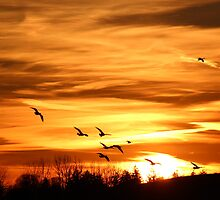 Sunset Flyers by Rosanne Jordan