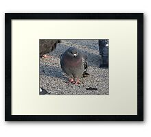 'I have a Royal Purple Bib'  3690 Framed Print