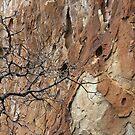 Twigs and Sandstone by Julia Washburn
