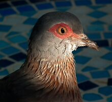 Pigeon Mosaic by WelshPixie