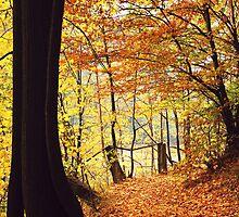 Autumn 5 by Dominika Aniola