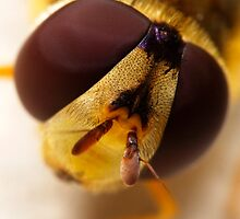 Hover-fly up close and personal by Robert Down