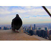 Empire Pigeon Photographic Print