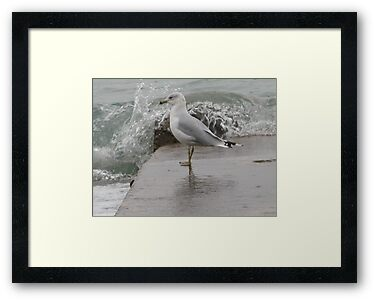 Seagull on end of pier. by Thomas Murphy