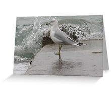 Seagull on end of pier. Greeting Card