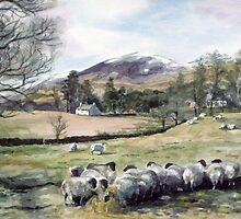 Sheep in Glen Clova Angus by Joyce Grubb