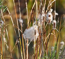 Cattails in Autumn by AZLiane