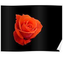 Rose on black Poster