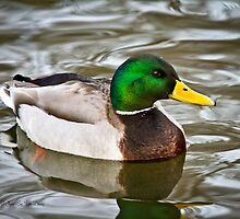 Just Ducky by Tim Denny