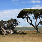The Coorong - South Australia by Ruth Durose