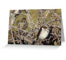 House Sparrow - Front and Back Greeting Card