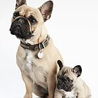 French Bulldog mother & baby by Andrew Bret Wallis