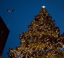 Christmas Market Tree at Night by Gary Chapple