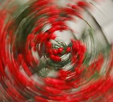 Holly Jolly Spin Cycle by RoyceRocks