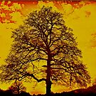 Fire Tree by andonsea