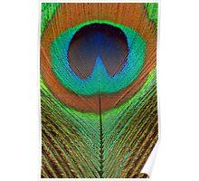 Animal - Bird - Peacock Feather Poster