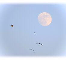 Fly me to the moon by Poete100